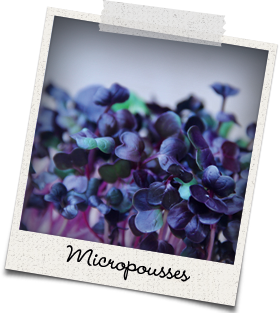Micropousses